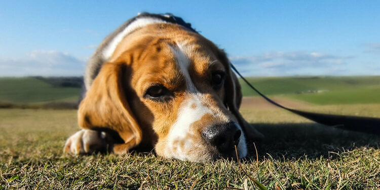 7-horrible-mistakes-that-pet-owners-make