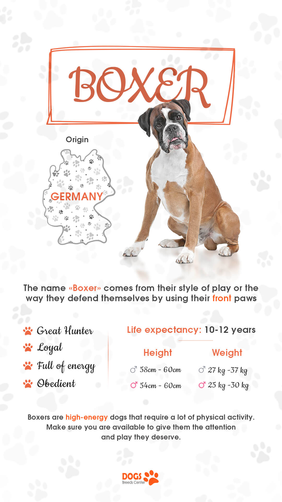 boxer dogs breed
